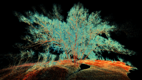 ULS_RiCOPTER_VUX-SYS_Forestry_Reflectance_002