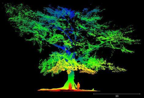 Tulip Tree LiDAR